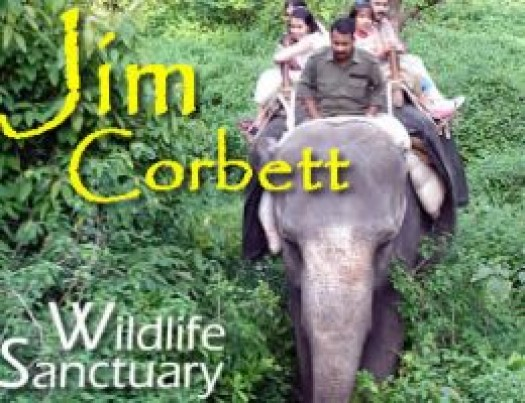 corbett tour package from delhi