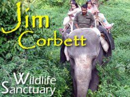 corbett tour package from delhi