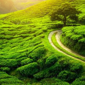 Darjeeling North East Package